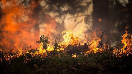 Forest-fire-2268729_640_thumb_main