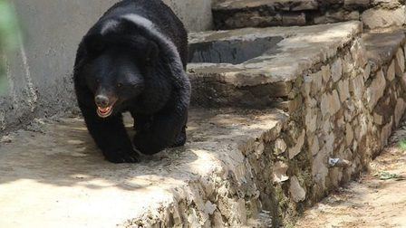 Black-bear-2434562_640_thumb_main