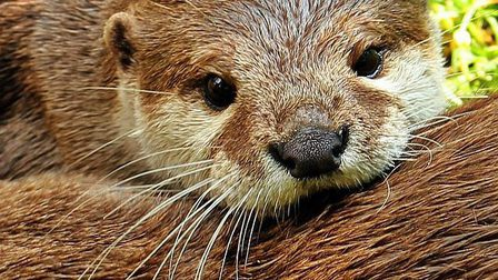 Otter-1438378_640_thumb_main